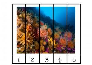 ocean animals puzzle number