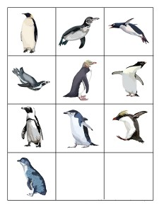 penguin learning penguin