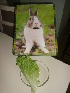 the bunny feed activity (3)