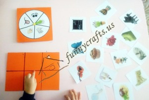 activity for teaching five senses (2)
