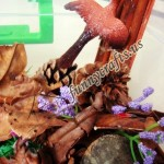 Our bird themed sensory bin