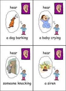 five senses cards printables for kıds (1)