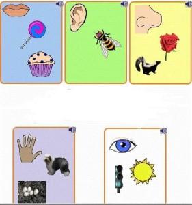 five senses cards printables for kıds (3)