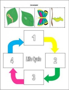 hungry caterpillar life cycle
