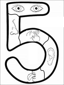 preschool five sense worksheets (1)