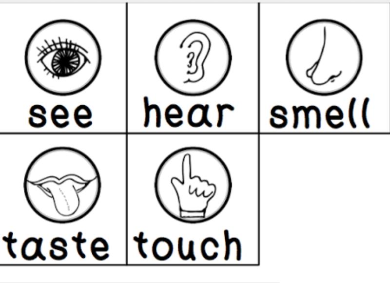 preschool five sense worksheets 1 preschool and homeschool. Black Bedroom Furniture Sets. Home Design Ideas