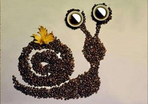 snail seed craft
