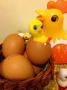 chicken sensory bin