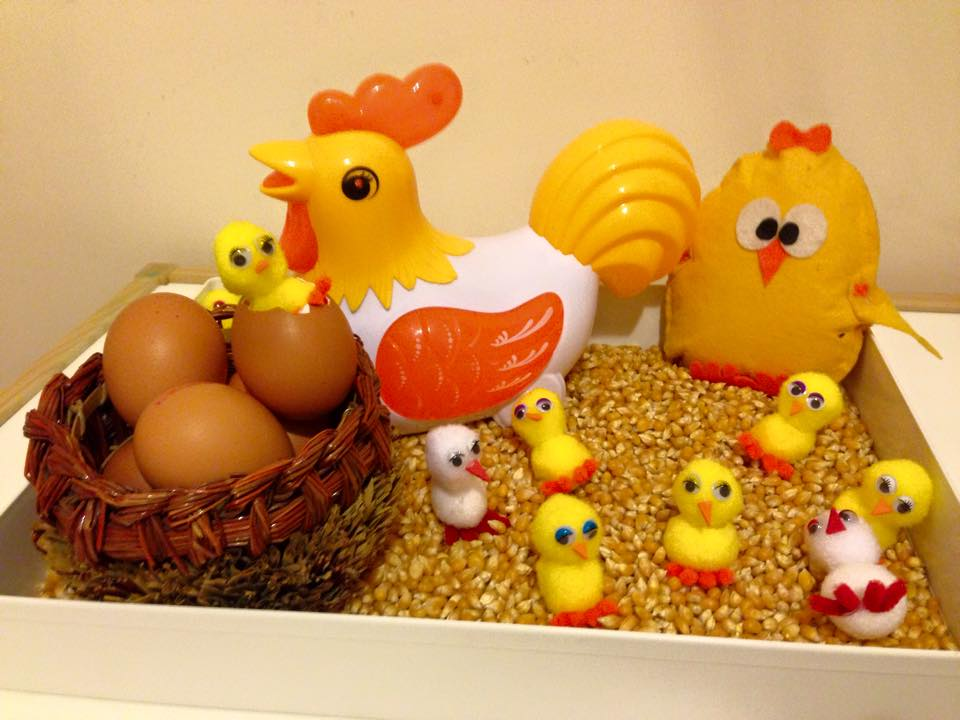 Life Cycle Of A Chicken Funny Crafts