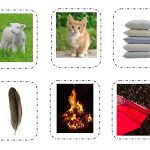 Five senses sorting cards