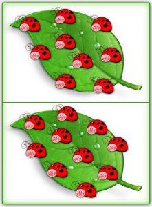 ladybug counting activity (6)