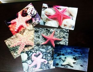 starfish toddlers pictures
