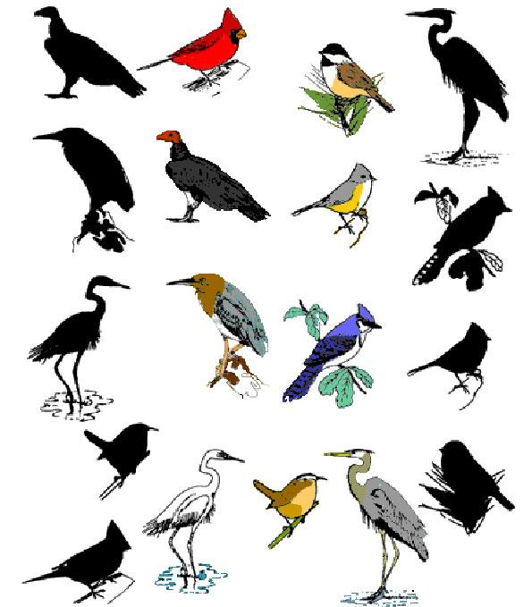 birds shadow matching funnycrafts