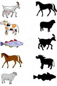 horse shadow matching sheets