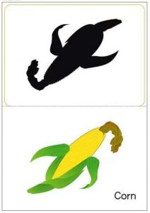 corn shadow matching