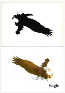 eagle shadow match