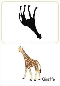 Matching Pictures To Shadows Worksheets Preschool And