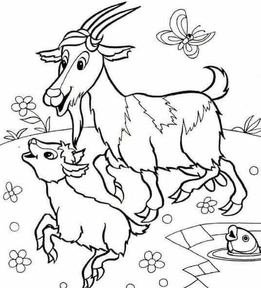 Animals And Their Babies Coloring Pages Goat