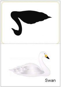 swan shadow match