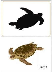 turtle shadow match