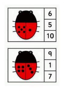 ladybug-counting6