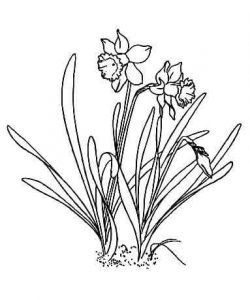 flowers-coloring-page-for-kids-11