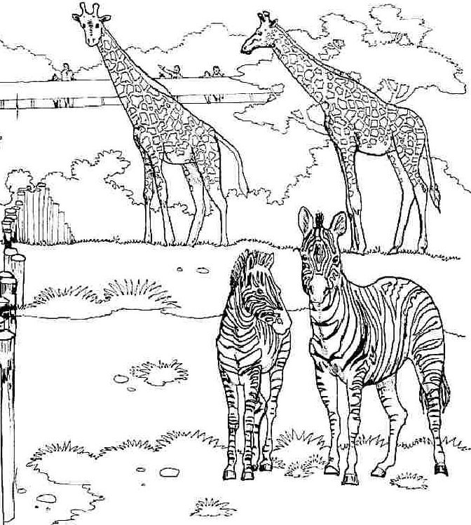 Giraffe and zebra coloring page Funnycrafts