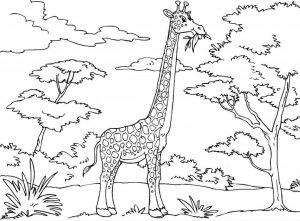 kids-giraffe-coloring-1