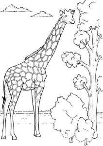 kids-giraffe-coloring-3