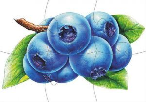 plum-jigsaw-puzzle-for-kids