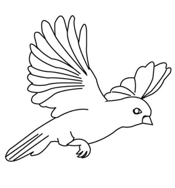 preschool bird coloring pages - photo#21
