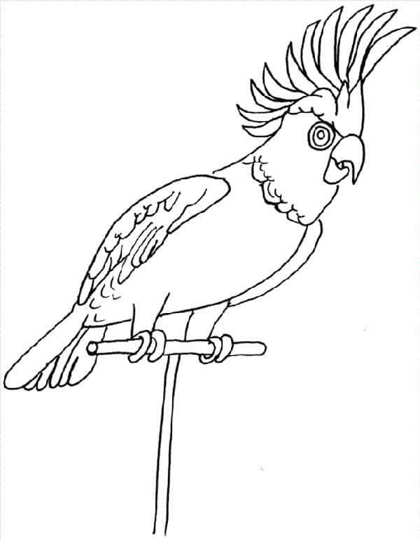 bird coloring pages for preschoolers - preschool bird coloring pages 2 preschool and homeschool