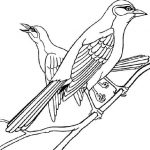 Kids bird coloring pages