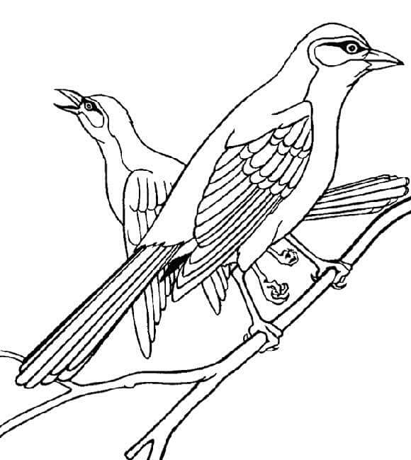 preschool bird coloring pages - photo#9