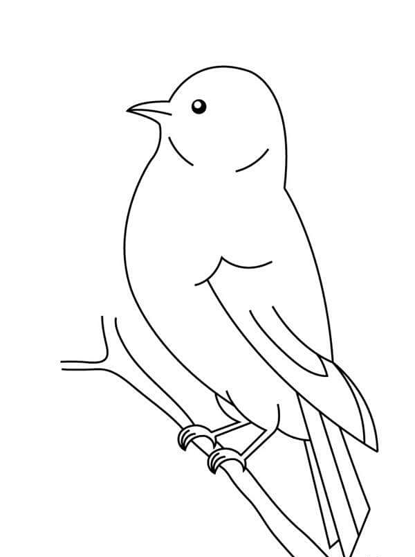88+ [ Bird Coloring Page Preschool ] - Love Bugs And ...