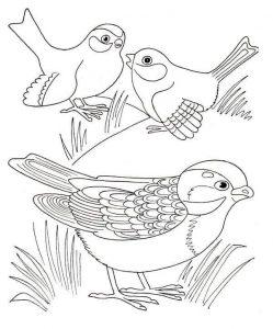 preschool-bird-coloring-pages-8