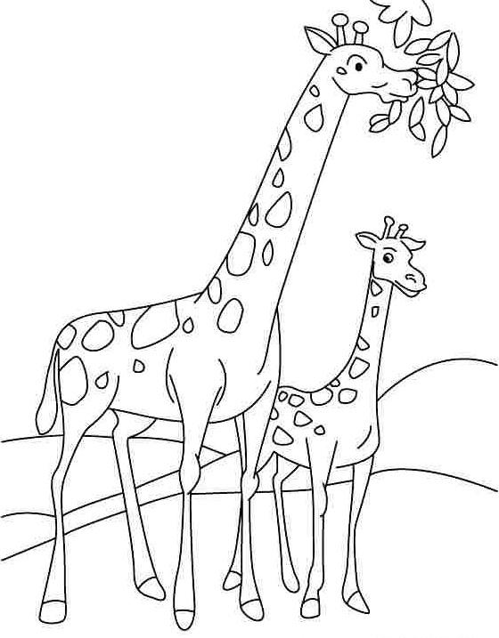 preschoolgiraffecoloringpages1
