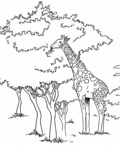Giraffe coloring pages The best