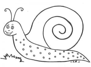 snail coloring pages (2)