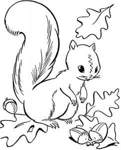 squirrel-autumn-coloring-3