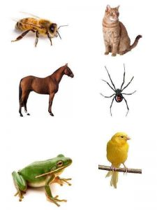 which-animal-lives-where