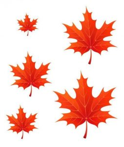 autumn-size-ordering-3