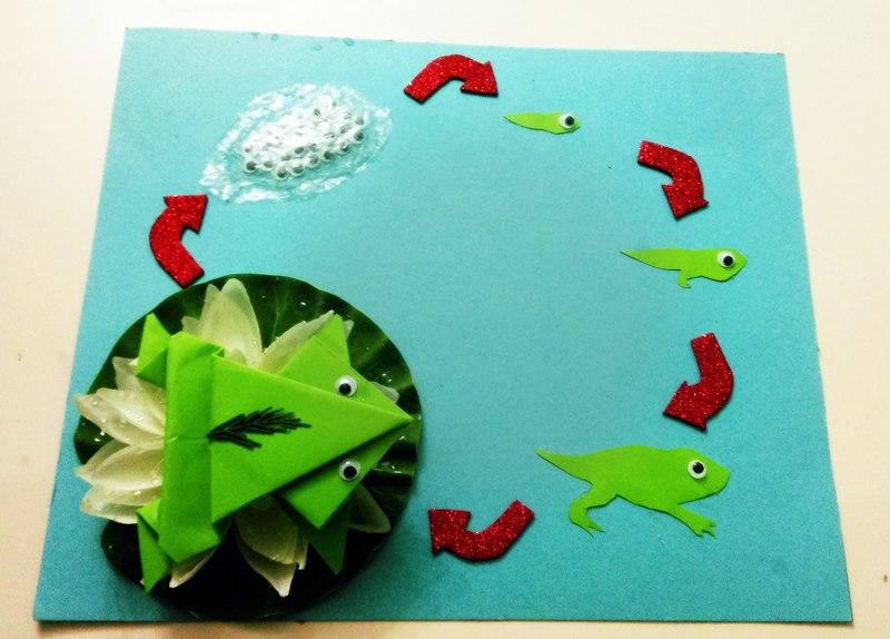 frog-life-cycle