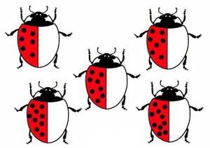 ladybug-counting-free-printables-1