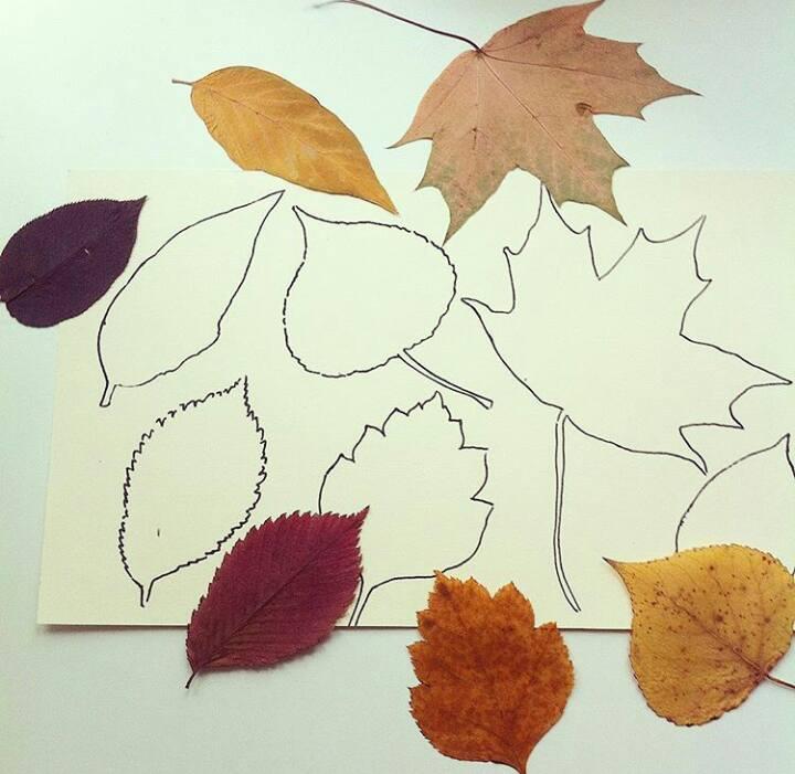 leaf-matching-activity