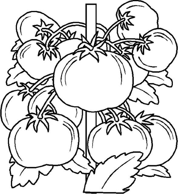 Vegetables Coloring Free 1