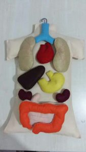human-body-craft-for-kids-3