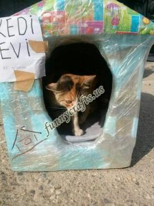 cardboard-cat-house-craft-ideas-7